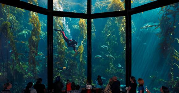 Monterey Bay Aquarium-f